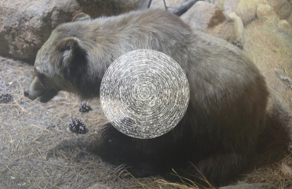 Extinct Bear